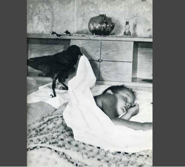Ворона-няня