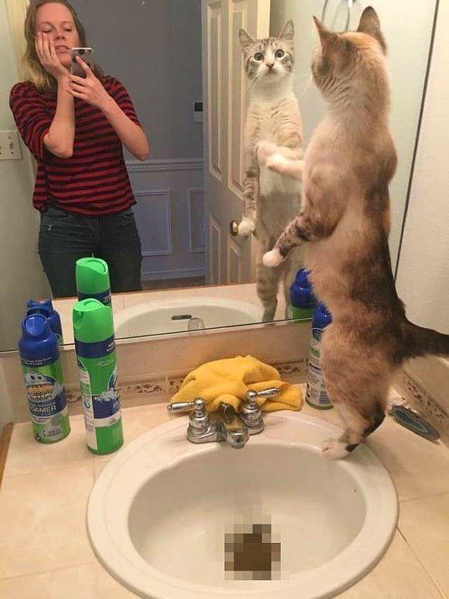 Кошки — это вам не только ми-ми-ми, но и такие вот подарочки