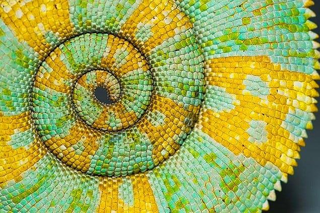 Люди склонны обсуждать идеальные треугольники, квадраты и круги, создаваемые природой, с точки зрения науки.