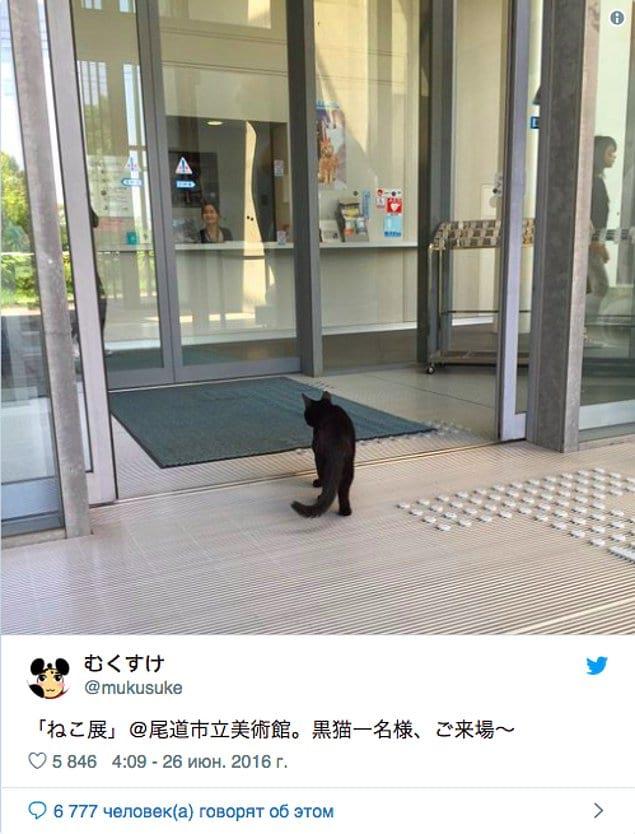"""Начиная с лета 2016 года, в художественном музее """"Ономити"""" состоялась фотовыставка домашних животных."""