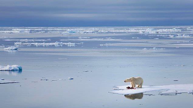 Отделение небольших айсбергов от основных ледников не является новым явлением, но с эффектом глобального потепления эта ситуация несколько изменилась.