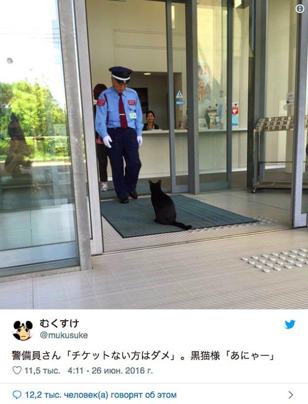 В один из дней в музей попытался зайти чёрный кот.