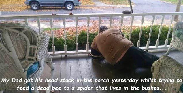 «Вчера мой отец застрял на балконе между перилами, когда пытался скормить мертвую пчелу пауку, который живет в кустах».