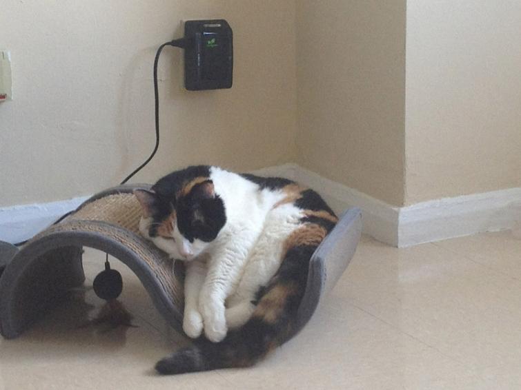 25 фотографий очаровательных котов толстопузов