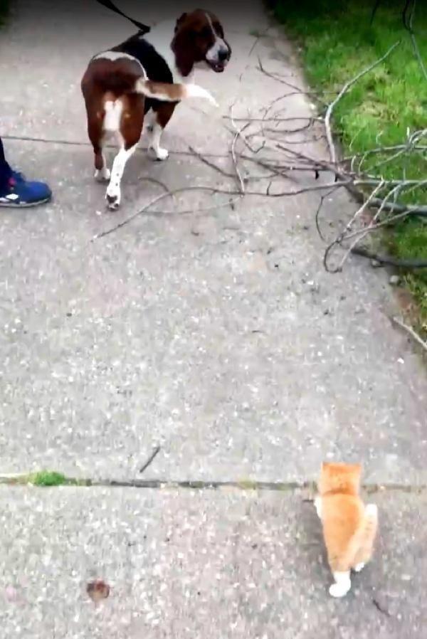 Бездомный котенок догнал человека с собакой и пошёл с ними домой