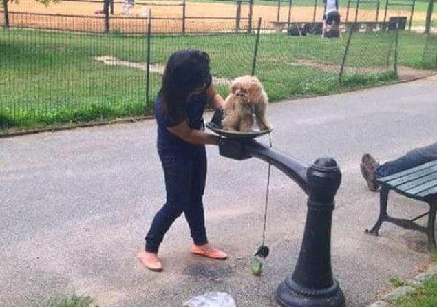Эта дамочка использовала питьевой фонтанчик в Центральном парке Нью-Йорка в качестве биде для своей собаки