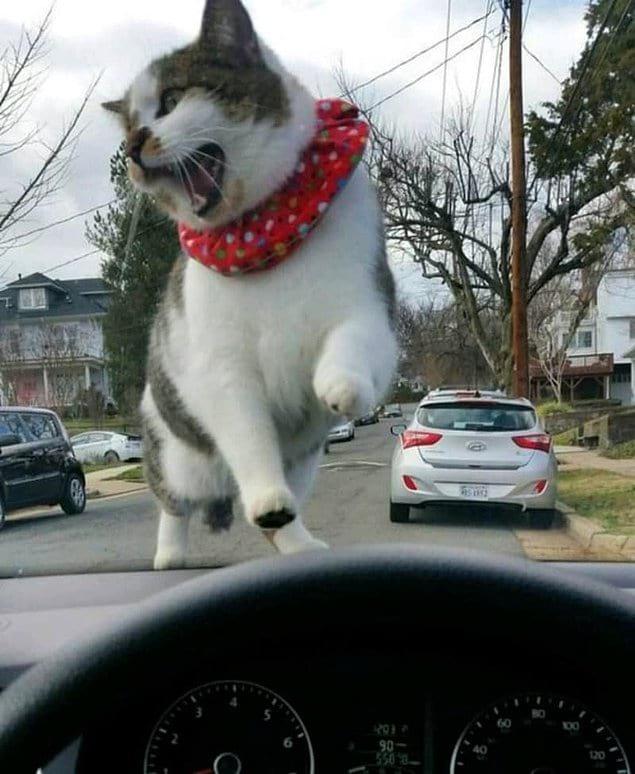 Гиганский кот? Показалось, а жаль :)