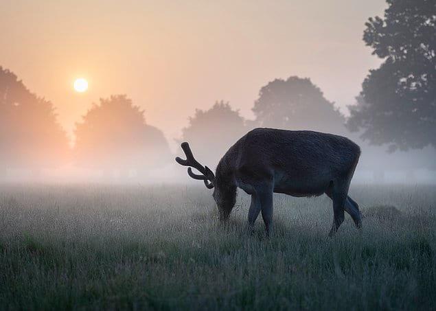 """""""Летнее утро"""" - Мэтью Кэттелл (Великобритания)"""