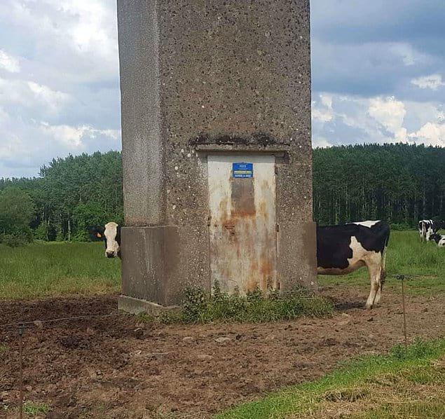 Молоко втройне вкусней, если оно от такой коровки!