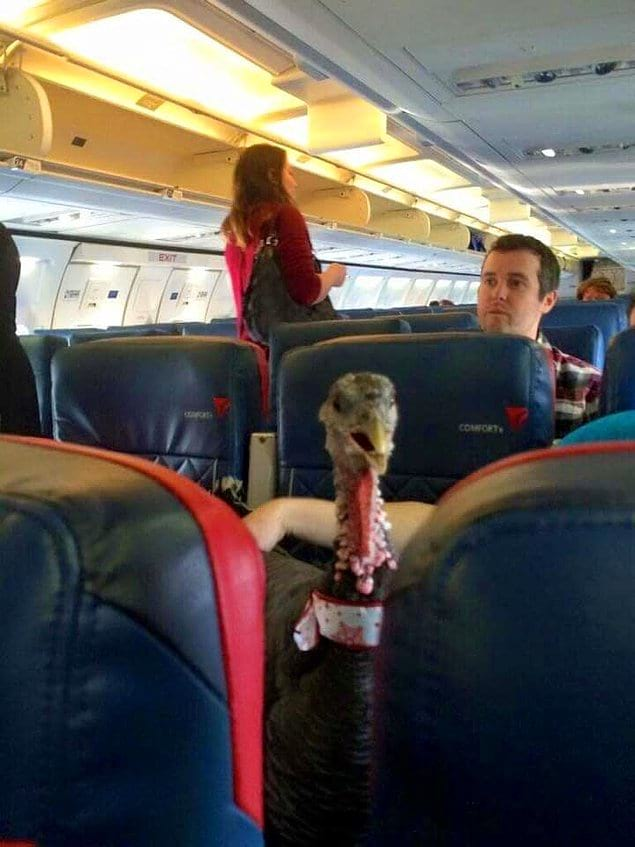 Просто индюшка в салоне самолета, шикарно...