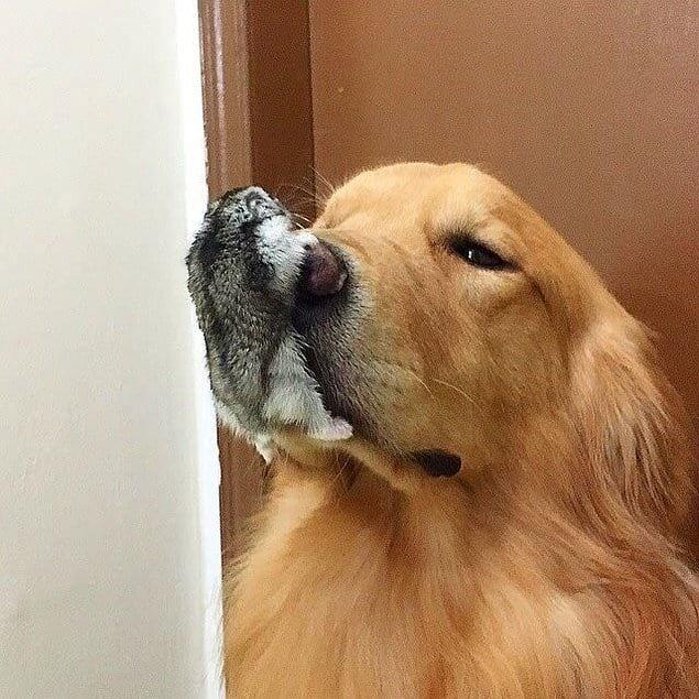 С собакой все в порядке, просто она не одна :)