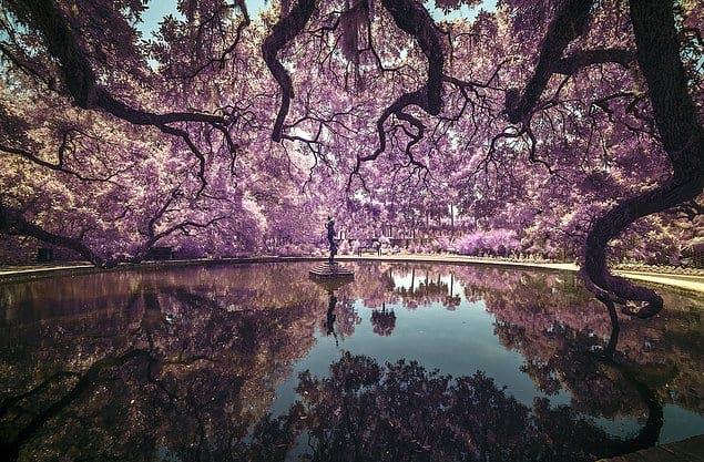 «Сад Брукгрин» - Тонино Викари (США)