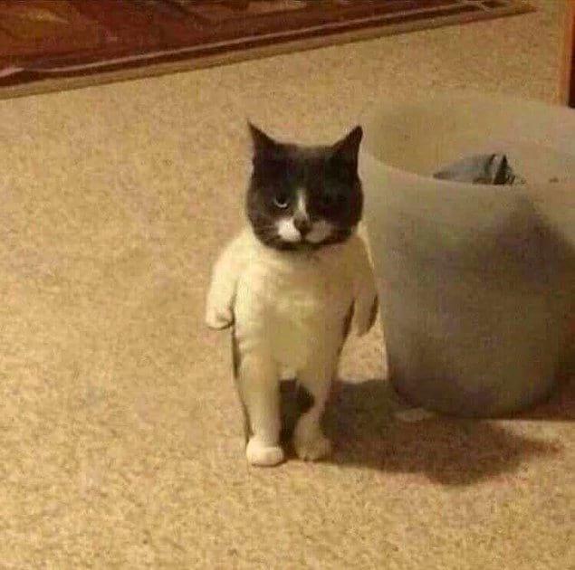 Успокойтесь, просто кто-то положил носок коту на спину :)