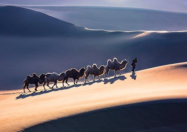 «Верблюжий поезд» - Пан Сяо Чжун (Китай)