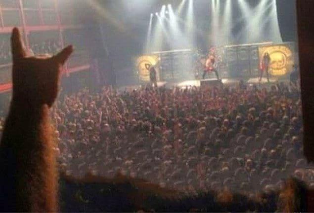 Вы не первый человек, который увидел кота, спокойно наблюдающего за рок-концертом :)
