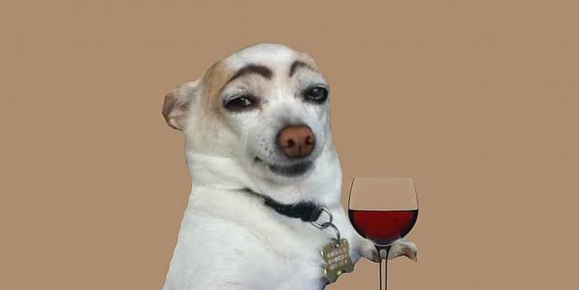 Вы задумывались когда-нибудь на каком языке думают собаки? Гавканьем? Лаем?