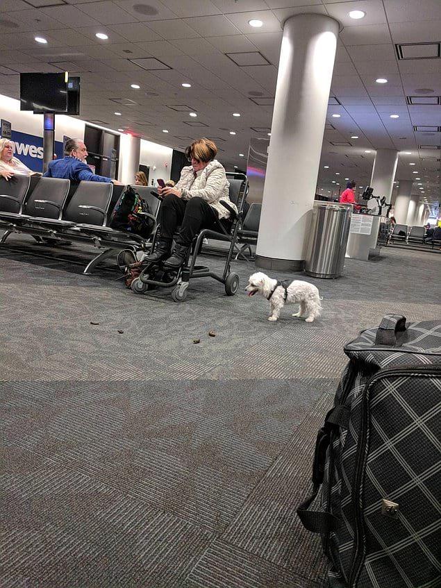 Женщина, может перестанете смотреть в телефон и уже уберете за своей собакой?