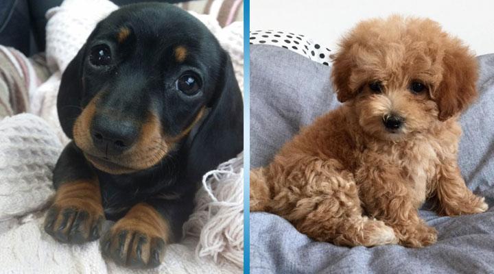 28 щенков, которые настолько милые, что можно потерять дар речи