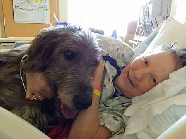 """""""Через 17 дней после того, как моя мама умерла от рака яичников, ее старый ирландский волкодав последовал за ней, чтобы быть рядом. Я так по ним скучаю""""."""
