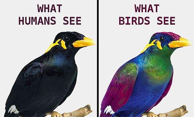 Что видит человек, и что видит птица.