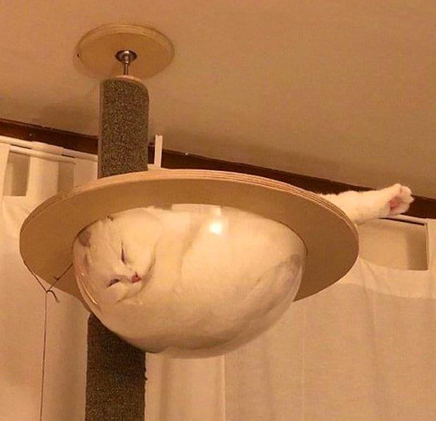 Еще одно доказательство того, что коты - это жидкость.