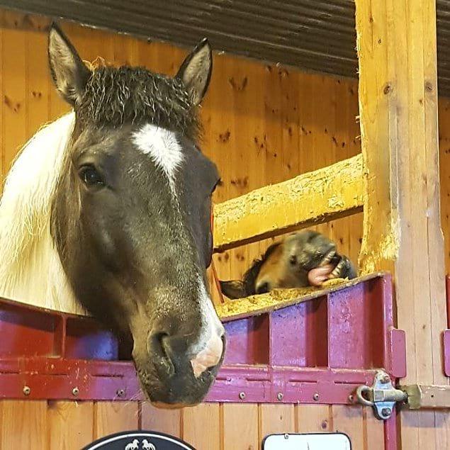 Лошади такие элегантные создания!