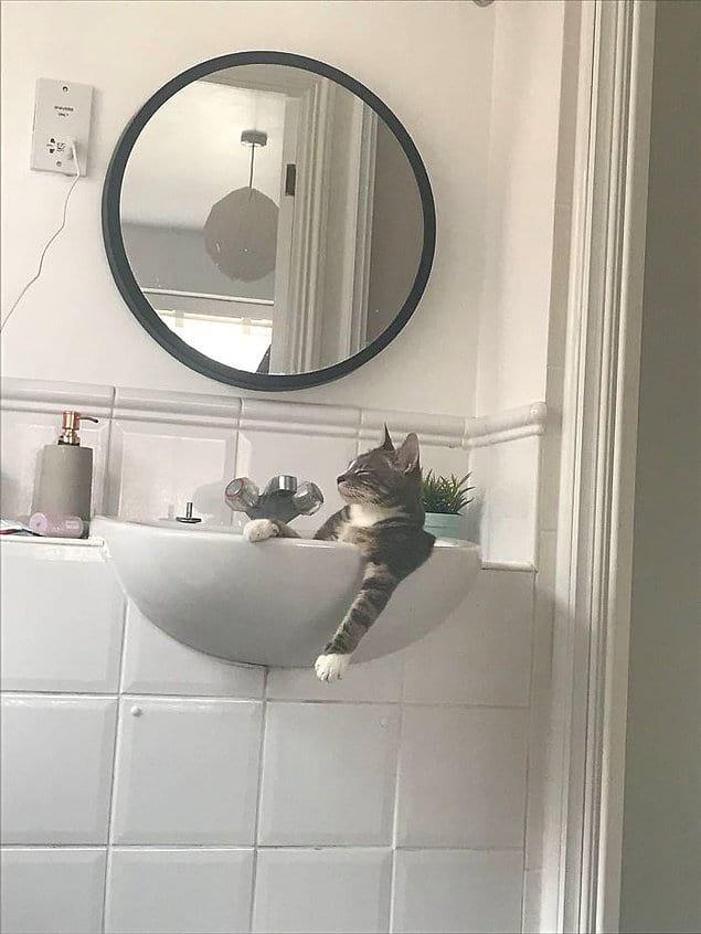 """""""Мой кот, когда думает, что никого нет дома""""."""