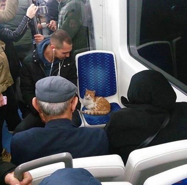Обычный день в стамбульском автобусе.