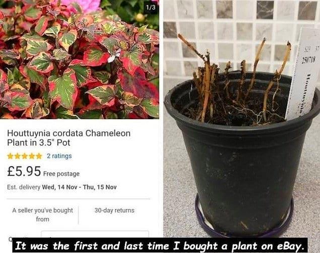 """""""Первый и последний раз я покупаю растение на ebay"""""""
