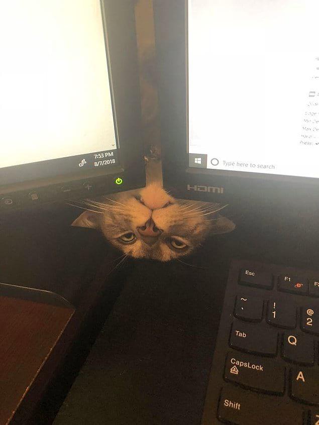 """""""Попался! На других котов смотришь?"""""""