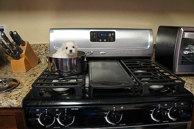 «Попросила брата посмотреть за моим щенком, пока я в командировке. Вернулась, а на рабочем столе компа такое фото»