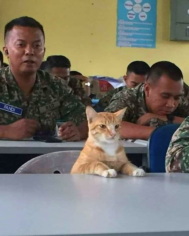 """""""Сержант Мяу к выполнению задачи готов!"""""""