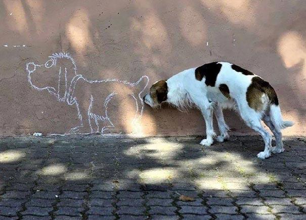 25 собак, которые ведут себя странно даже для других собак
