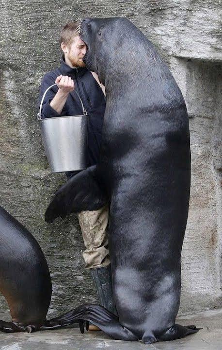 15+ невероятных животных-нахалов, которые не знают, что такое стыд
